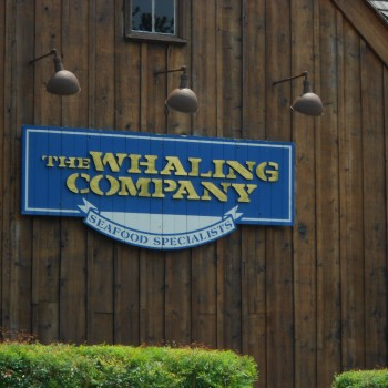 The Whaling Company